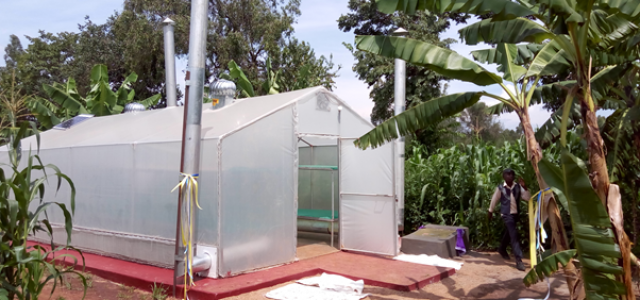 A multi-purpose solar biomass drier developed in Kakamega county by departmental staff under the RE4Food Project