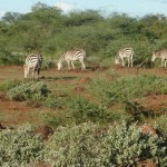 Grant from WWF-EN for training WRUAS in Tsavo