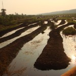 What You Need to Know About Waterlogging in Agricultural Lands:  Training Notes by Prof. B.M. Mati