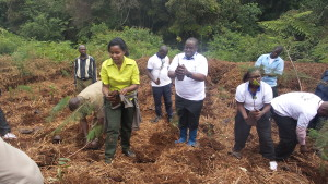 Prof. Mati – Director, WARREC (left), Eng. Gichuki – MD, NCWSC (centre) with others prepare tree seedlings