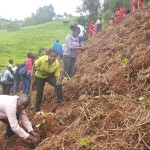 WARREC – JKUAT Participates in Tree Planting for Ndakaini Dam Catchment Conservation