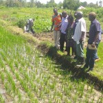 Water Saving Technology boosts rice production