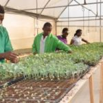 HOSA Students Venture into Greenhouse Vegetable Seedlings Production