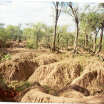 Design of Soil and Water Conservation Structures for Smallholder Agriculture