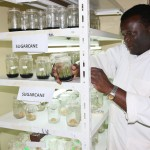 New Planting Material for Kenyan Cane Farmers