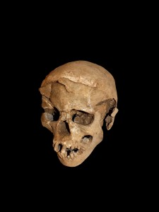 This skeleton was that of a man, found lying prone in the lagoon's sediments. The skull has multiple lesions on the front and on the left side, consistent with wounds from a blunt implement, such as a club. Image by Marta Mirazon Lahr, enhanced by Fabio Lahr