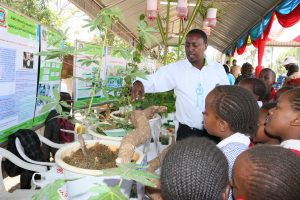 Young farmers learn from the JKUAT cassava diagnostics research team about disease free cassava roots